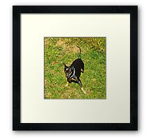 Grover, after a roll in the hay, er grass Framed Print