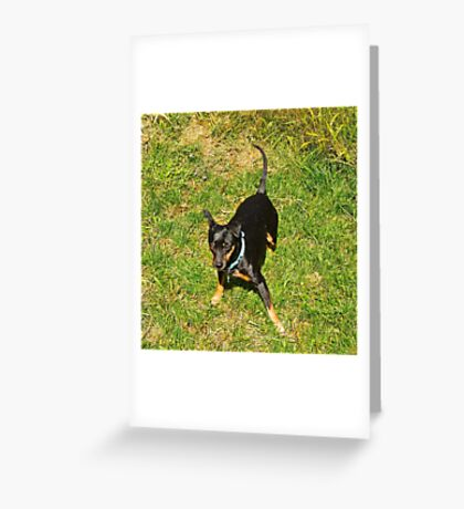 Grover, after a roll in the hay, er grass Greeting Card