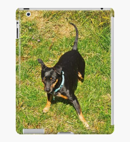 Grover, after a roll in the hay, er grass iPad Case/Skin