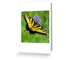 Summertime Butterfly Greeting Card