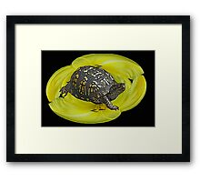 Box Turtle on Lily Framed Print