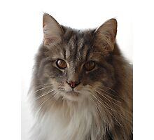 Gizmo the cat Photographic Print