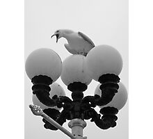 Master Of All He Surveys - Seagull In Brighton Photographic Print