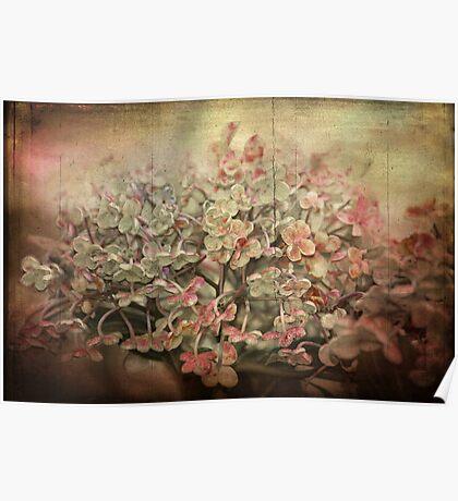 ~ Vintage Hydrangea ~ Poster