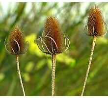 Three In A Row Photographic Print