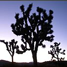 Joshua Trees at Dusk by Angel LaCanfora