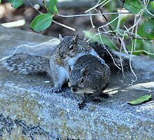 Hugging Squirrels by Jeff Ore