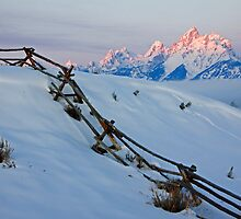 Running Buck & Rail Fence, The Teton Range by AMRuttleResale