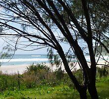 Burleigh Heads Beach Panorama  by Virginia McGowan