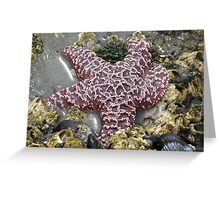 Starfish at Newport Oregon beach Greeting Card