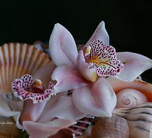 Orchid Garnish by Carolyn Staut