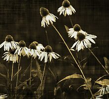 Echinacea - Sepia by Terrie Taylor