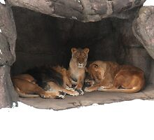 Metroparks Zoo 14 by BarbBarcikKeith
