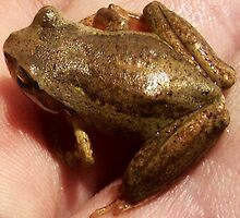 a frog in the hand by Peta Hurley-Hill