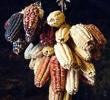 Mais by pvsnyder