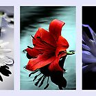 Triptych of flowers by Doug McRae