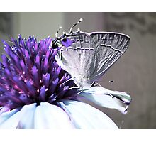Spikes & Wings Photographic Print