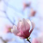 Spring Blooms Anew by Briana McNair