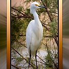 Egret Framed by George Lenz