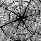 Circles within Circles by Corri Gryting Gutzman