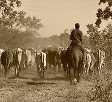 Taking the cows home by Carmel Williams
