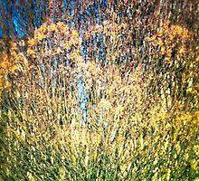 Tree Texture #1 by James Zickmantel