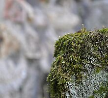 Moss on Holy Water Font by CharlotteCdV