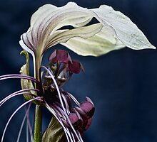Bat Plant by Dianne English