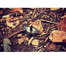 Wild butterfly Photographic Print