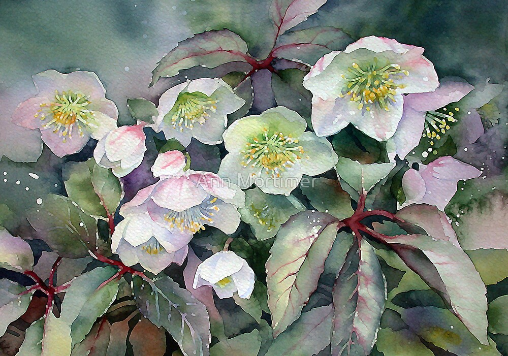 February Hellebores by Ann Mortimer