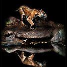 Sumatran Tiger by ArtX