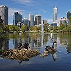 City Swans by Keith Lightbody