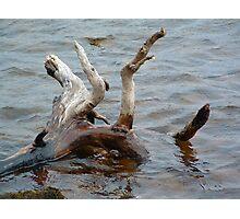 Driftwood Loch Photographic Print
