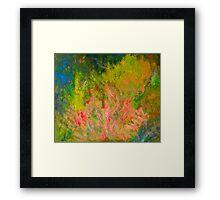 My garden in spring - the diosmas flourish - Kilmore East VIC  Framed Print