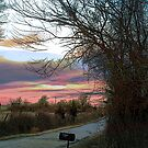 Country Road by Pat Moore