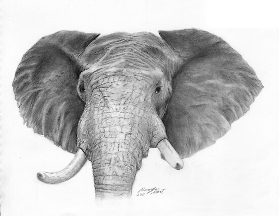 Elephant by Ronny Hart