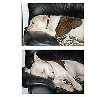 time for sleep Photographic Print