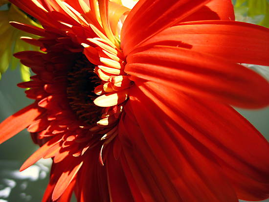 A flower by Phil Campus