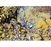 Tide Pool Photographic Print