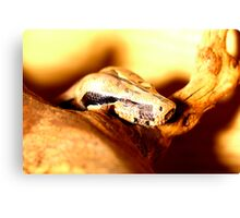 headshot of a Boa constrictor  Canvas Print