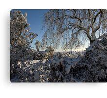 Soft snow laden garden shrubs and trees Canvas Print