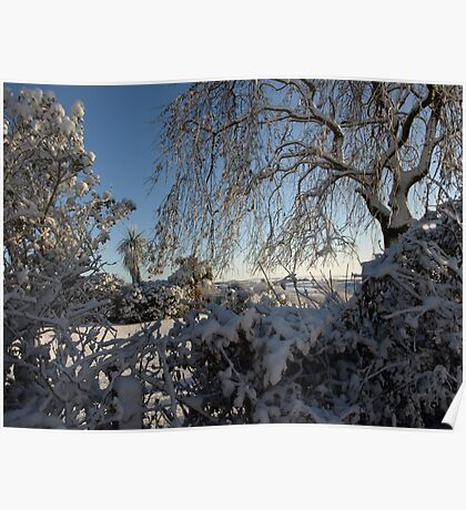 Soft snow laden garden shrubs and trees Poster