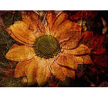Floral Decay # 1 Photographic Print