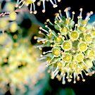 atomic flower by yvesrossetti
