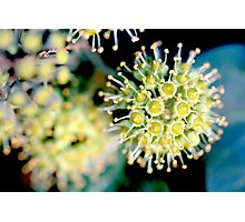 atomic flower Photographic Print
