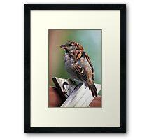 Little Brown Sparrow Framed Print