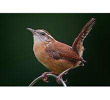 Little Bird with a Big Attitude Photographic Print