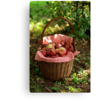 Little Red Riding Hood's Apples Basket Canvas Print