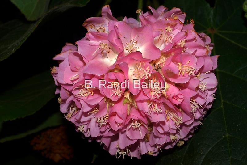 Pink Ball Tropical Hydrangea by ♥⊱ B. Randi Bailey
