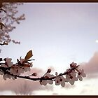 waking up spring.. by LisaBeth